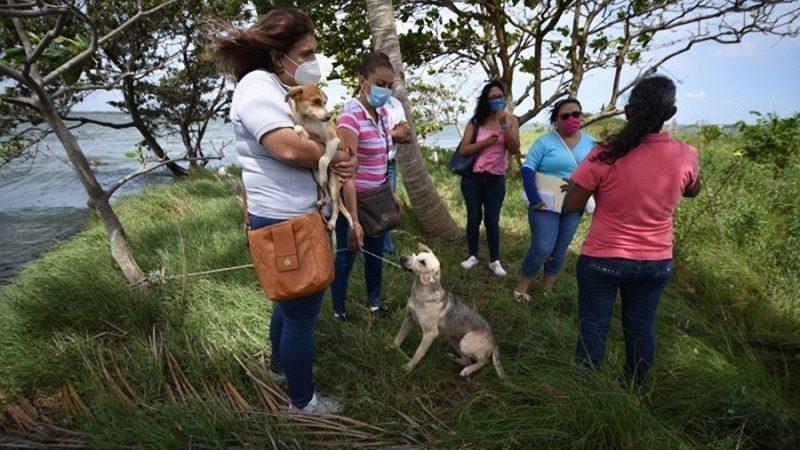 AYUNTAMIENTO ANUNCIA CÁRCEL A QUIEN ABANDONE PERROS EN ISLA DE ALVARADO
